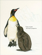 Click for Larger View of King Penguins